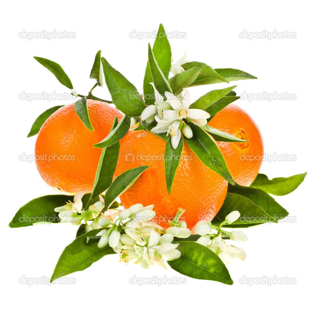 Orange Tree Flowers On A Orange Fruit Stock Photo
