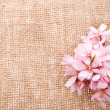 Blossom almond with needle on fabric sack — Stock Photo #27705875