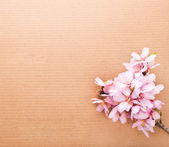Greeting card , almond blossoms with pasteboard — Stock Photo