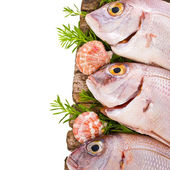 Fresh fish bream, monkfish, cod, sole Sprinkle with salt and decorated with leaves and herbs isolated on white background — Stock Photo