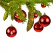 Branch of a Christmas tree and brilliant red balls and fir cones isolated on white background — Foto Stock