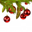 Branch of a Christmas tree and brilliant red balls and fir cones isolated on white background — Stockfoto