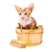 Lilla röda kattungen har ett bad med skum på huvudet isolerade på vit bakgrund — Stockfoto