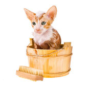 Little red kitten has a bath with foam on head isolated on white background — Photo