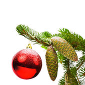 Covered with snow branch of a Christmas tree and brilliant red ball and fir cones isolated on white background — Stock Photo
