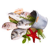Fresh Dorado fish and other fish in a tin bucket with fresh leaves and herbs isolated on white background — ストック写真