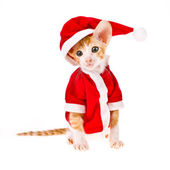 Theme New Year holidays and Christmas. little red kitten dressed as Santa Claus isolated on white background — Stock Photo