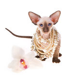 Little cat decorated with beads from pearls isolated on white background — Stock Photo