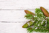 Theme New Year holidays and Christmas Green spruce branches with cones — Stock Photo