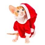 Little red kitten dressed as Santa Claus — Stock Photo