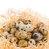 Fresh quail eggs in a nest — Stock Photo