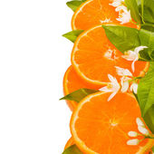 Citrus fruit - orange , cut off from the side — Stock Photo