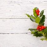 Christmas and New 2014 plant aquifolium — Stock Photo