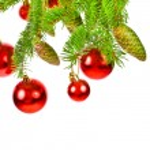 bir Noel ağacı dalı — Stok fotoğraf