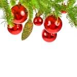 Zweig eines Weihnachtsbaumes — Stockfoto