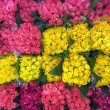 Stock Photo: Flowers for sale