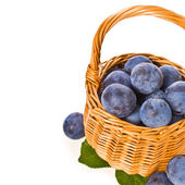 Mature round blue plum with green leaves — Stock Photo