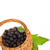 Wicker basket with fresh berries black currants — Stock Photo