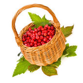 Small wicker basket and cowberry berries — Stock Photo
