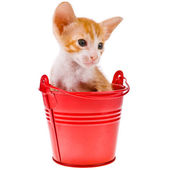 Little red with white kitten — Stock Photo