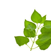 Green branch of a plant with leaves — Stock Photo