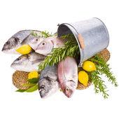 Fresh Dorado fish and other fish — Stock Photo