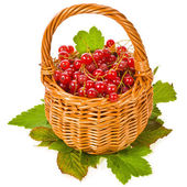 Wicker basket with fresh berries red currants — Stock Photo