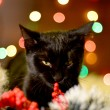 Cat and Christmas decoration — Stock fotografie #37073489