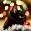 Cat and Christmas decoration — ストック写真 #37073505