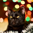 Cat and Christmas decoration — ストック写真 #37073507