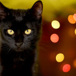 Cat and Christmas decoration — Stock fotografie #37073817