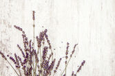 Lavender Background — Stock Photo