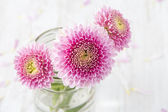 Three Pink Flowers — Stock Photo
