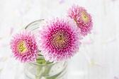 Three Pink Flowers — Zdjęcie stockowe