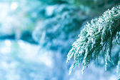 Ice covered branch of pine tree — Foto de Stock