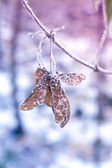 Winter Frozen Seed — Stockfoto