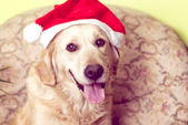 Dog with Santa Claus hat — Photo