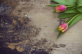 Spring Tulip on wooden background — Stock Photo