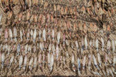 Dried Squid on Stand. — Stock Photo