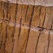 Texture of Bark Coconut Tree. — Stock Photo