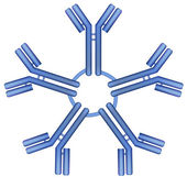IgM antibody pentamer molecule — Stock Vector