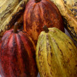 Cocoa fruits ensemble — Stock Photo