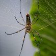 Poisonous Spider in Rainforest — Stock Photo