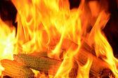 Burning corn cobs — Stock Photo