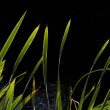 Reeds at lake against light — Stock Photo