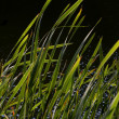 Reeds at lake against light — Stock Photo #28043689
