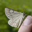 Butterfly sitting on fingertip — Stock Photo