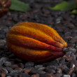 Cocoa Pod on Cocoa Beans — Stock Photo