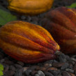 Couple of Cocoa Pods on Cocoa Beans — Stock Photo