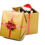 Santa Puppy Christmas Gift — Stock Photo